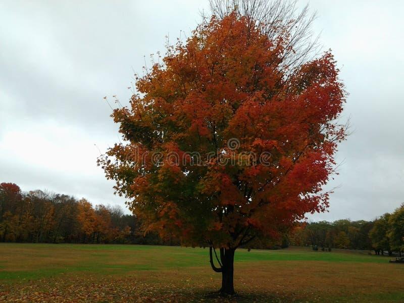 El árbol del otoño imágenes de archivo libres de regalías