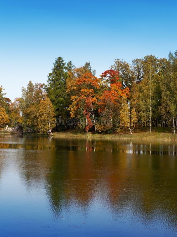 El árbol del otoño con follaje brillante se refleja en el lago foto de archivo libre de regalías