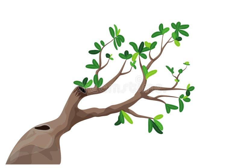 El árbol del Plumeria stock de ilustración