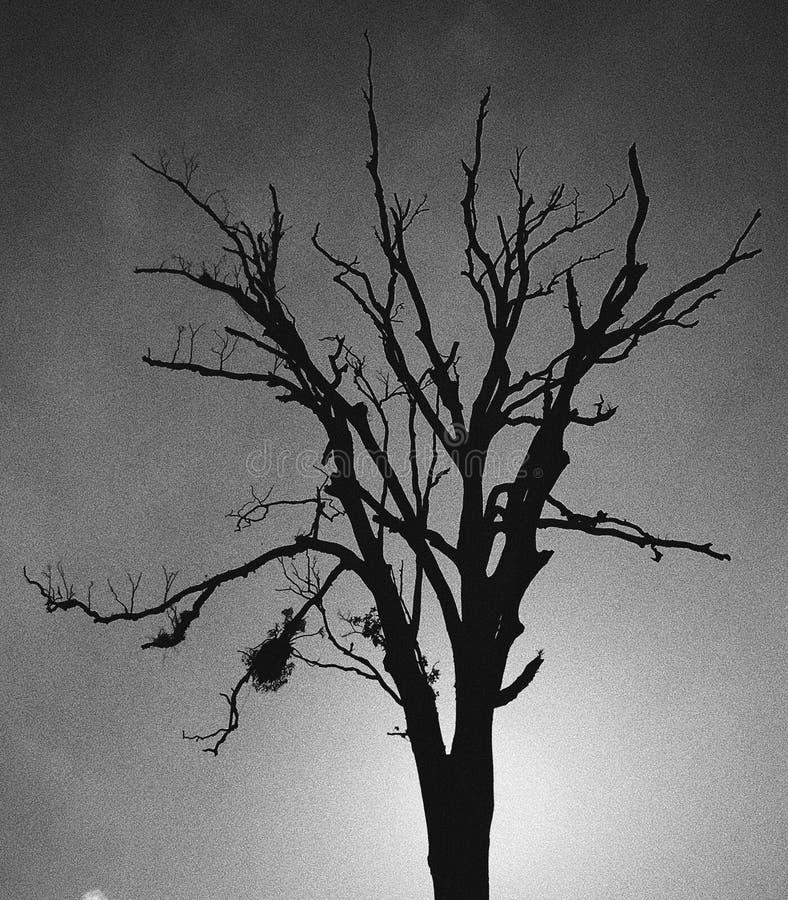El árbol deshojado imagenes de archivo