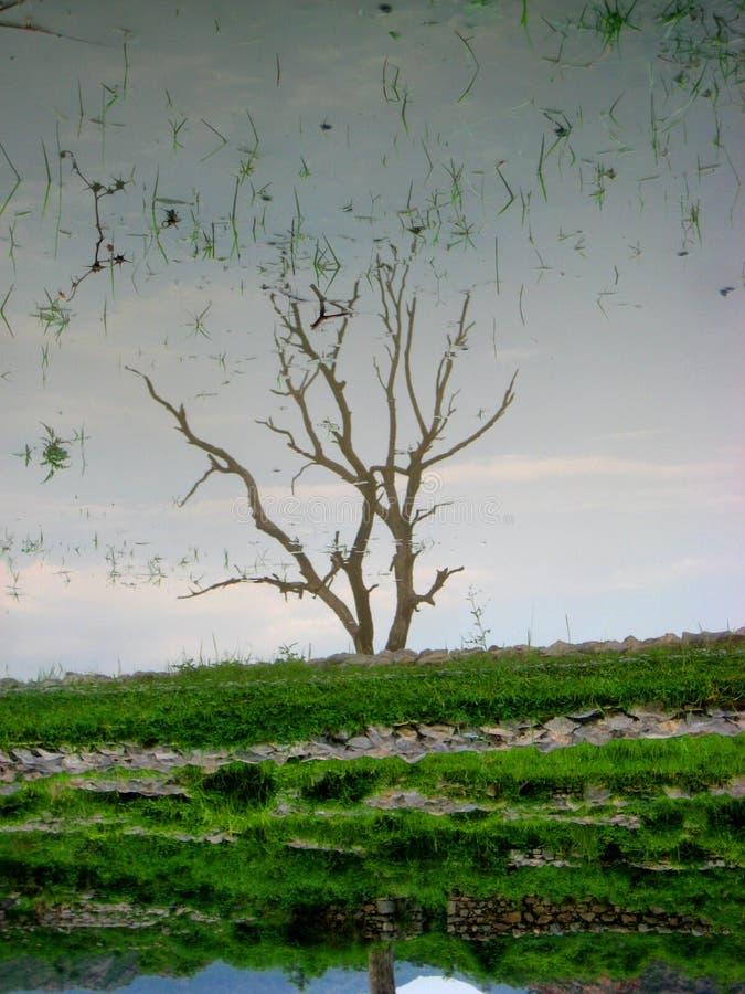El árbol en Sirkap permanece fotos de archivo