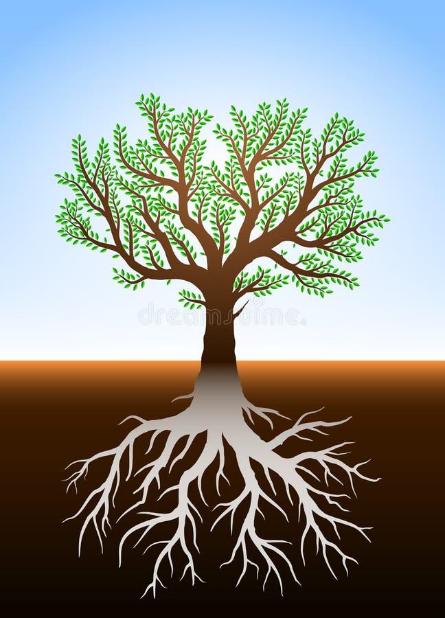 El árbol en tierra y él es raíces stock de ilustración