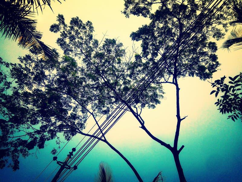 El árbol es nuestro amigo del ambiente fotos de archivo libres de regalías