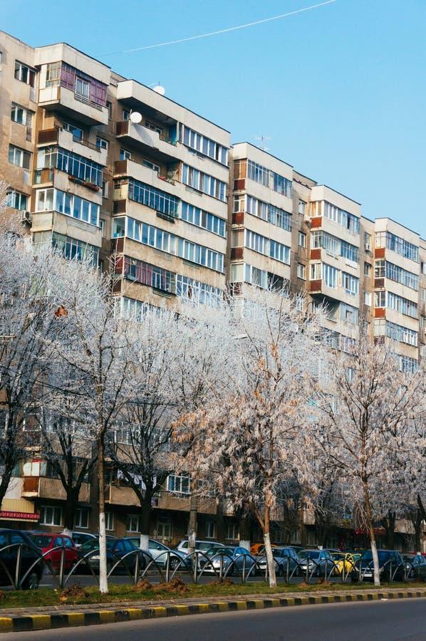 El árbol escarchado alineó la calle, Bucarest, Rumania imagen de archivo