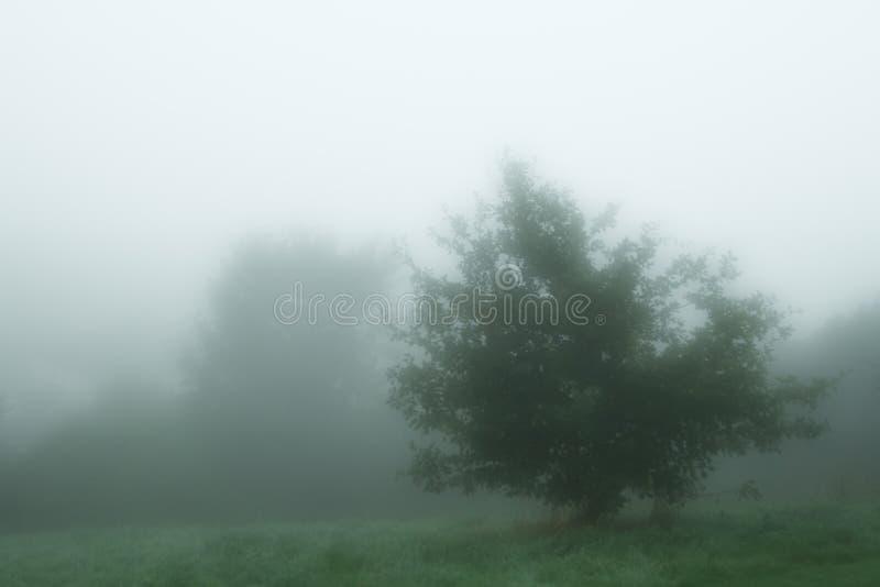 El árbol fresco del myst en el inglés de la mañana se empaña imagenes de archivo