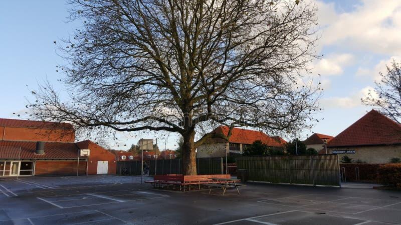 El árbol grande en mi escuela imágenes de archivo libres de regalías