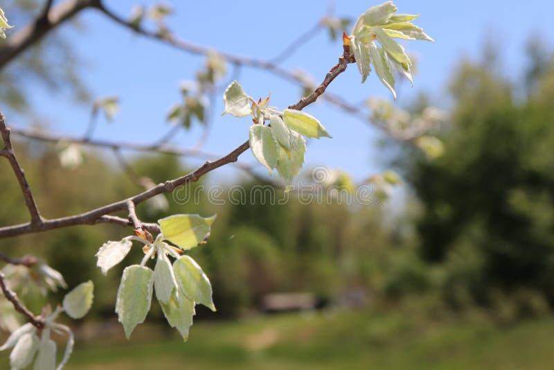 El árbol, hojas, brotes, empañó el fondo, afuera foto de archivo