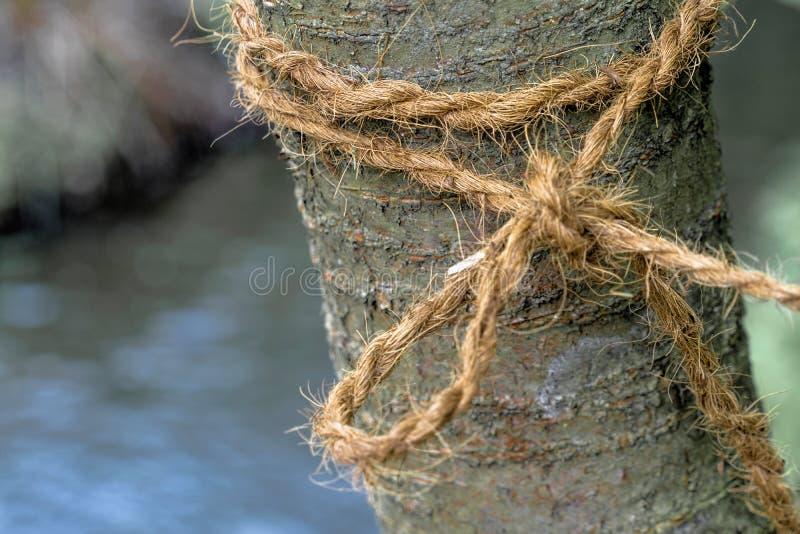 El árbol joven con un lazo ató firmemente a él imagenes de archivo