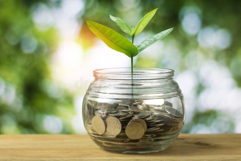 El árbol joven que crece en apilado del dinero acuña fotografía de archivo libre de regalías