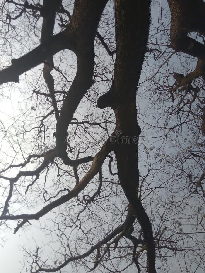 El árbol más viejo imagenes de archivo