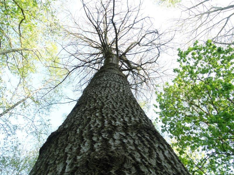 El árbol mira para arriba foto de archivo