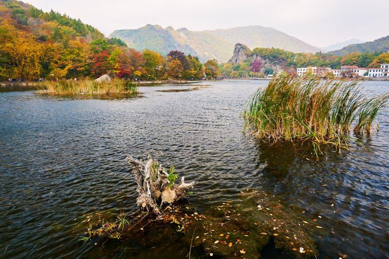 El árbol muerto en el lago imágenes de archivo libres de regalías