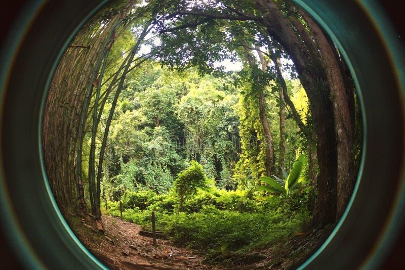 El árbol natural pasa en Forest Puerto tropical RIco foto de archivo libre de regalías