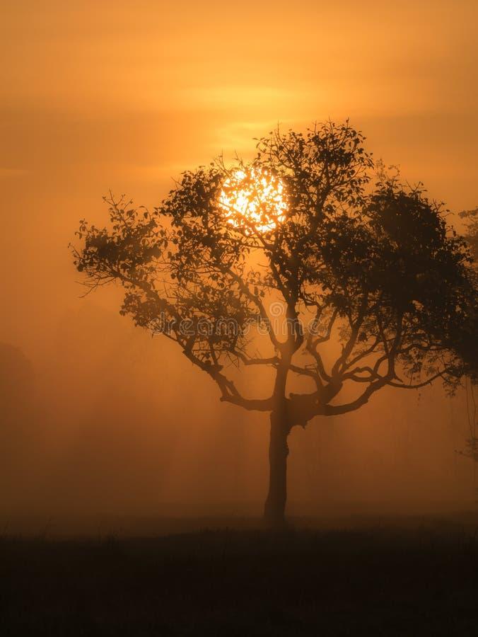 El árbol obscureció The Sun a través de un haz foto de archivo