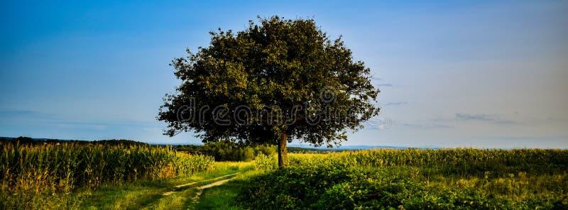 El árbol perfecto fotos de archivo