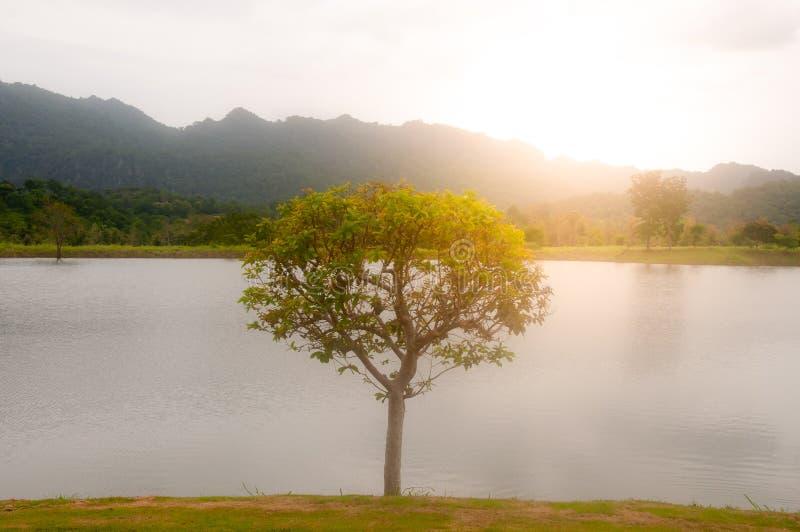 El árbol, el río y la montaña grandes con el sol encienden el fondo foto de archivo libre de regalías