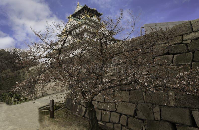 El árbol rosado del blossum de la cereza y la pared de piedra con Osaka se escudan debajo del cielo imagenes de archivo