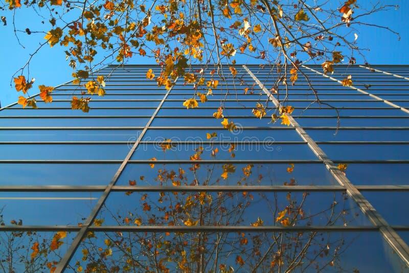 El árbol sale del edificio imagenes de archivo