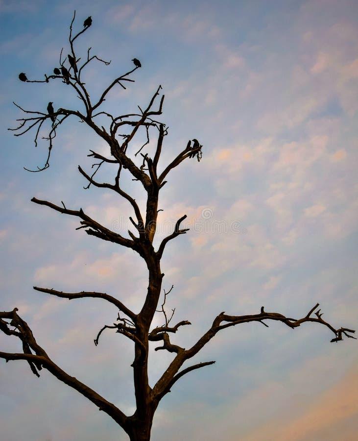 El árbol solitario foto de archivo