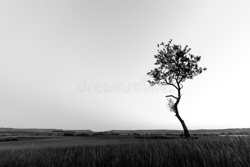 El árbol solitario 2 fotografía de archivo libre de regalías