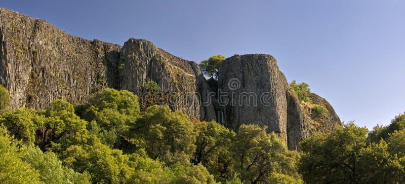 El árbol solitario crece entre los acantilados escarpados imagen de archivo