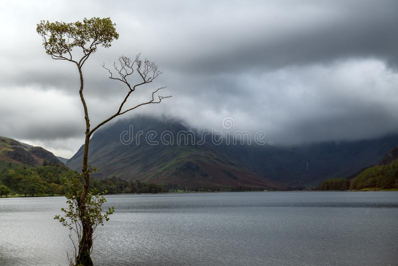 El árbol solitario de Buttermere durante el mún tiempo foto de archivo libre de regalías