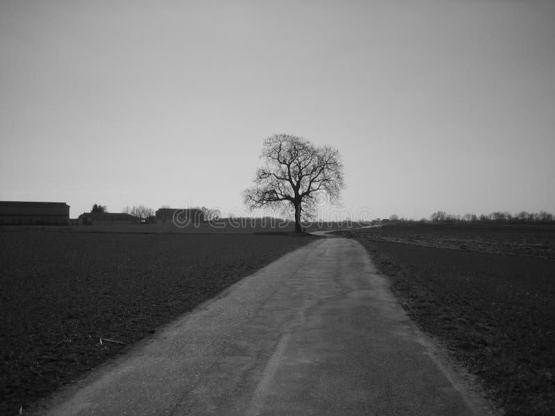 El árbol solo 1 imagen de archivo