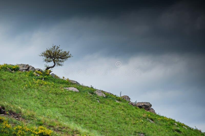 El árbol solo crece en cuesta rocosa en estepa fotografía de archivo libre de regalías