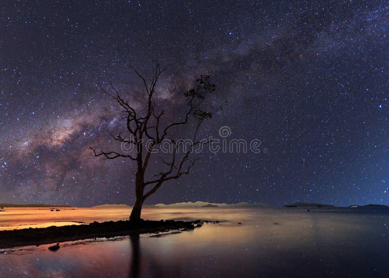 El árbol solo del soporte bajo noche estrellada claramente con la vía láctea foto de archivo libre de regalías