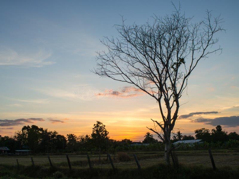El árbol solo en el campo fotos de archivo