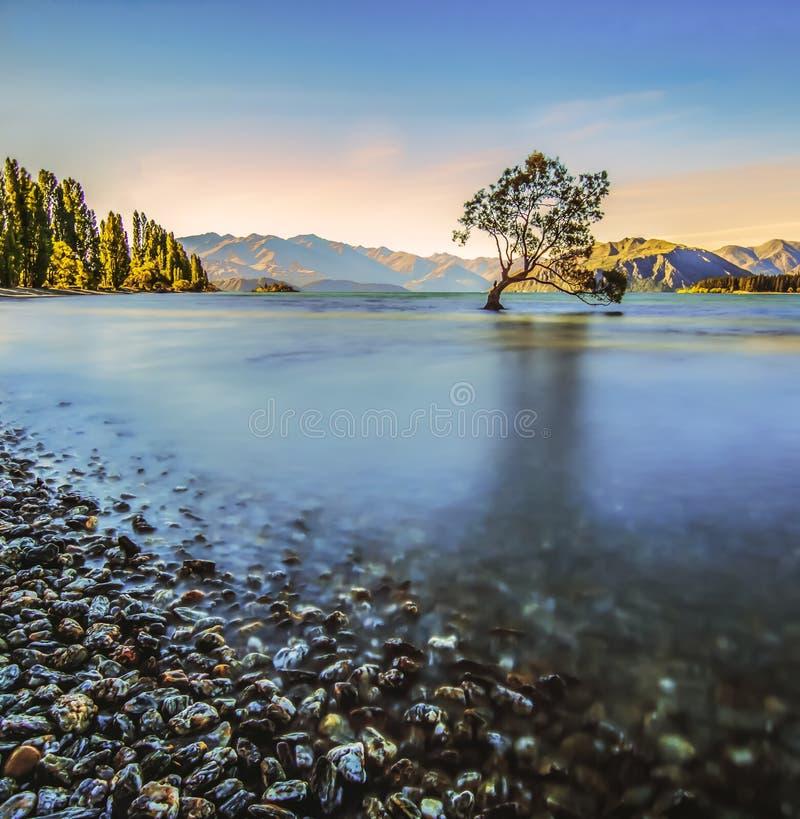 El árbol solo en el lago foto de archivo libre de regalías