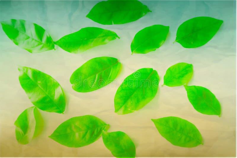 El árbol verde del color hermoso del extracto se va en el fondo y el papel pintado aislados blancos fotografía de archivo