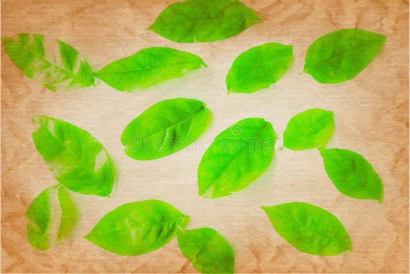 El árbol verde del color hermoso del extracto se va en el fondo y el papel pintado aislados blancos fotografía de archivo libre de regalías
