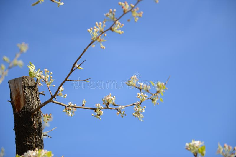 El árbol viejo revela y abraza la nueva rama foto de archivo