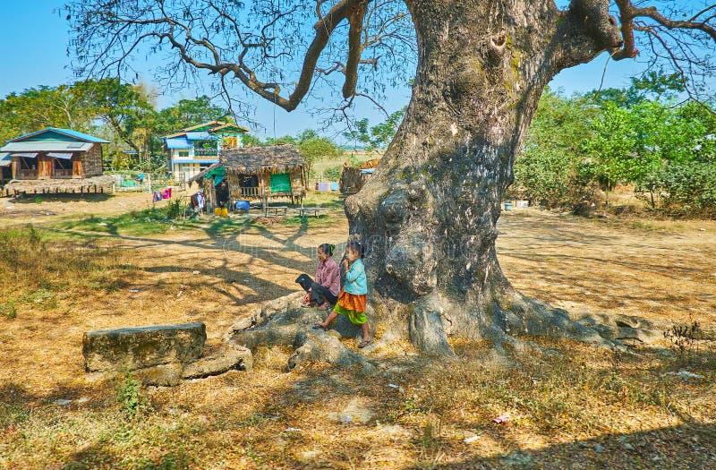 El árbol viejo, suburbio de Rangún, Myanmar fotos de archivo