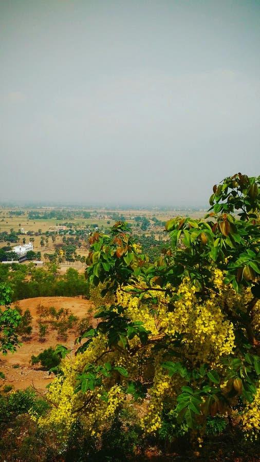 El árbol y el paisaje amarillos foto de archivo