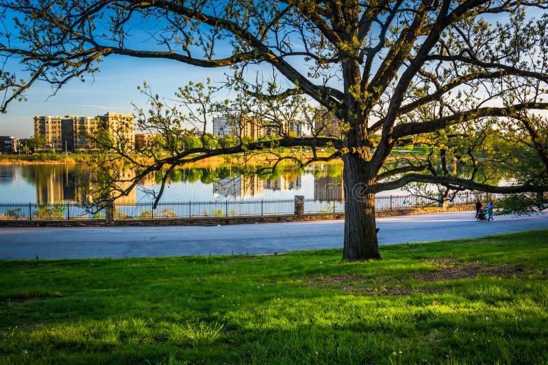 El árbol y la vista del lago druid en colina del druida parquean, Baltimore, Maryl imagen de archivo libre de regalías