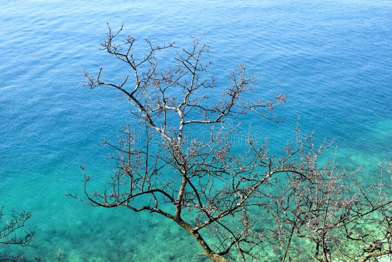 El árbol y el mar secos de las ramas en el fondo/el ambiente natural hermoso wallpaper/estación turística, viaje, concepto de las foto de archivo