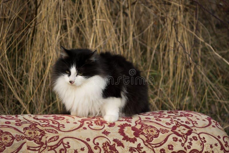 El él-gato fotos de archivo
