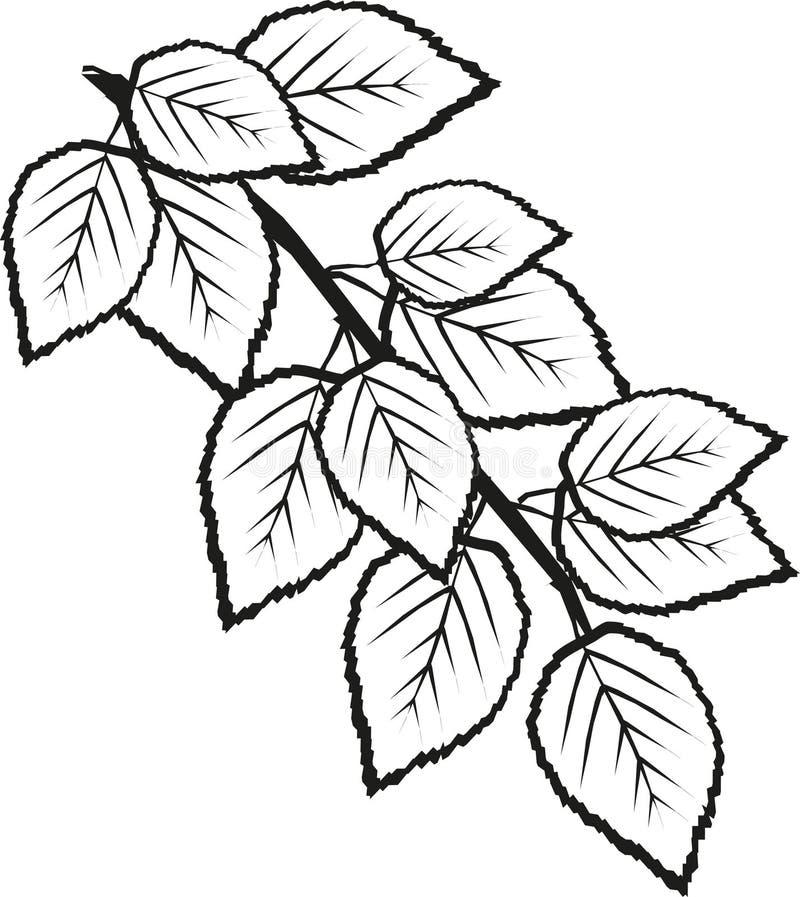 El abedul sale de la puntilla mono ilustración del vector