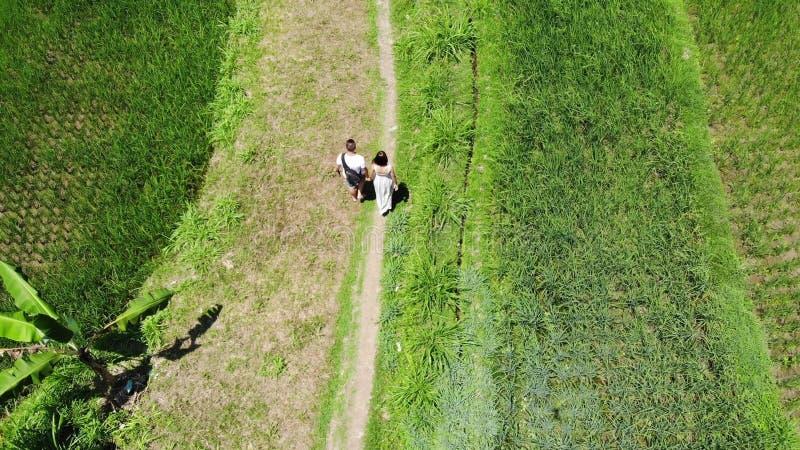 el abejón aéreo 4K tiró de los turistas el vacaciones que caminaban la trayectoria en campos de la terraza del arroz de arroz en  imagen de archivo