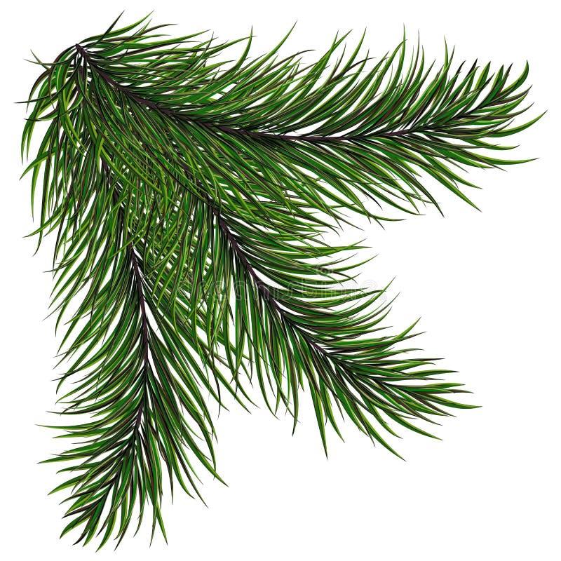 El abeto de los árboles de navidad y de las guirnaldas del verde del Año Nuevo ramifica con las agujas largas stock de ilustración