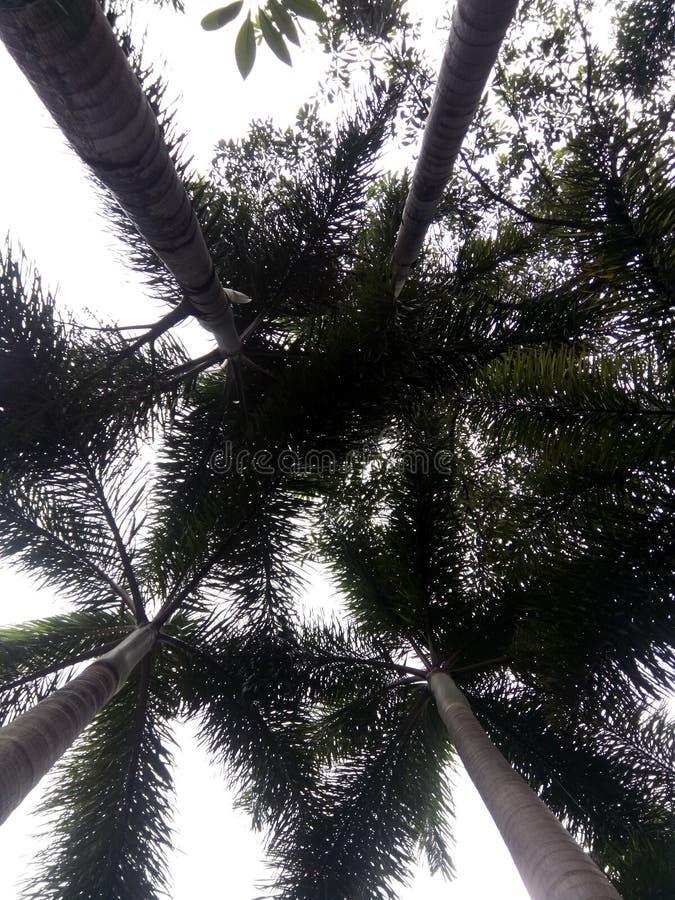 El aboveside de palmeras foto de archivo libre de regalías