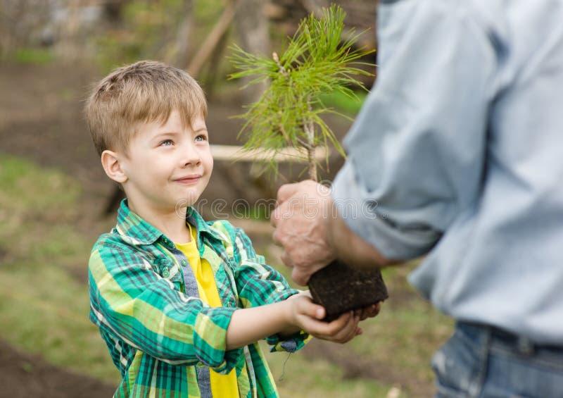 El abuelo transmite a su árbol joven del cedro del nieto imagen de archivo libre de regalías