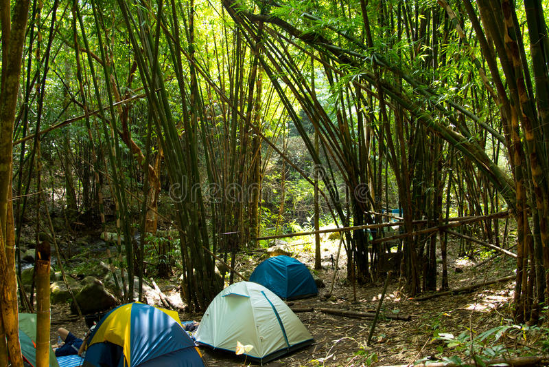 El acampar en el bosque de bambú imagen de archivo libre de regalías