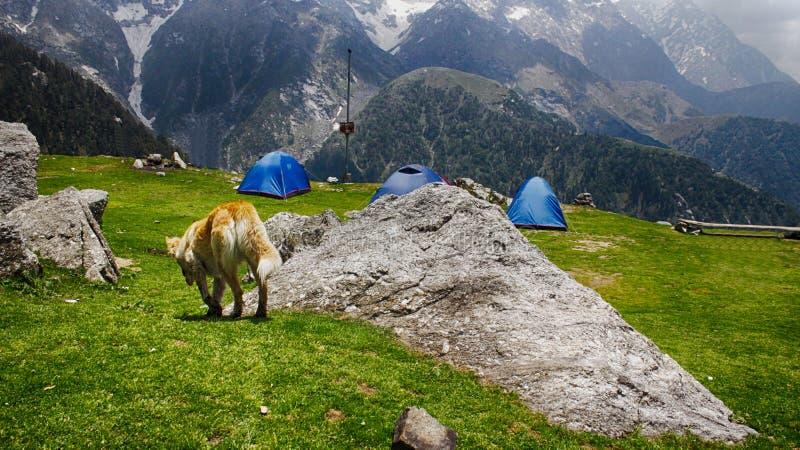 El acampar en montañas imagenes de archivo