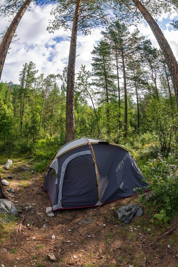El acampar y tienda de las aventuras debajo del bosque del pino al aire libre en el MOR fotos de archivo