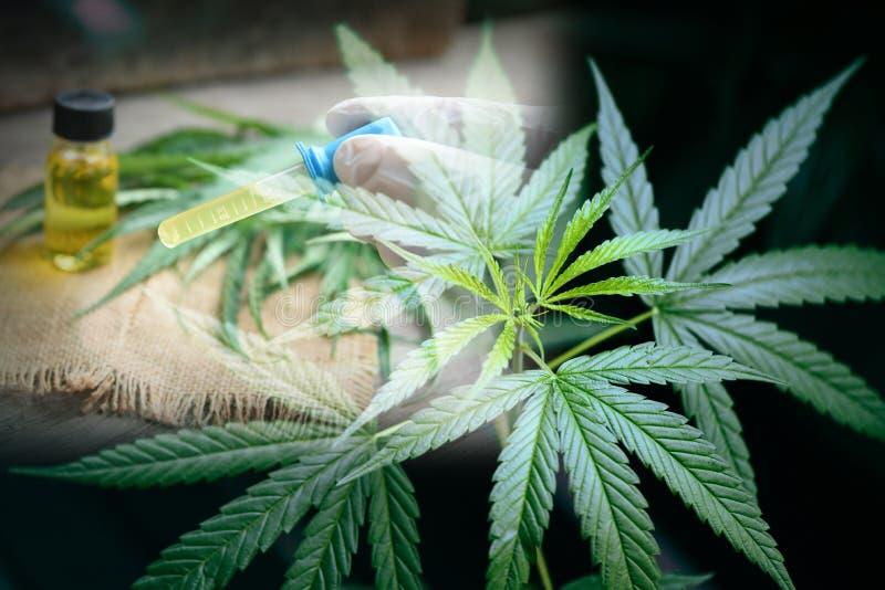 El aceite del cáñamo en el extracto del aceite de los productos/CBD de la botella de la marijuana de la hoja del cáñamo sale del  fotos de archivo