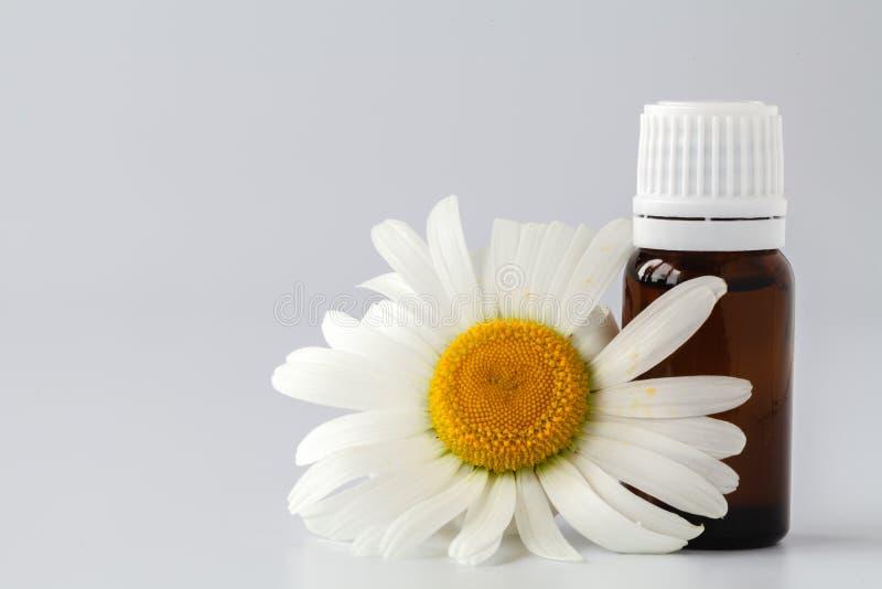 El aceite esencial en la botella de cristal con la manzanilla fresca florece, galán foto de archivo
