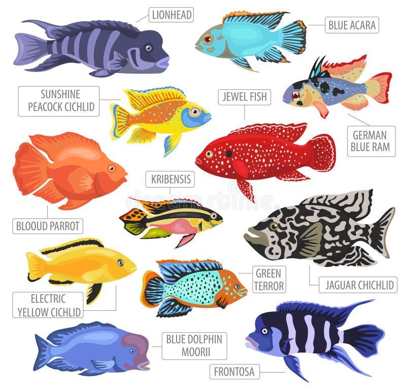 El acuario de agua dulce pesca el estilo plano determinado o del icono de las razas stock de ilustración